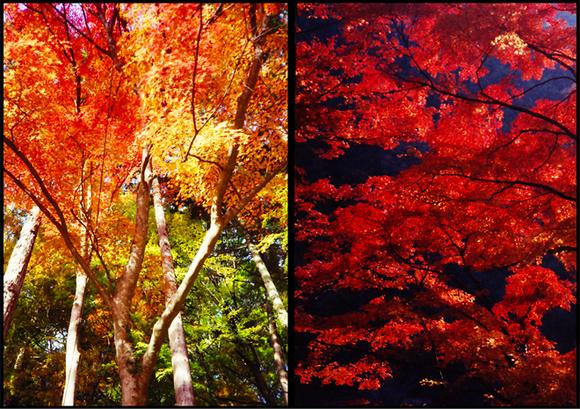 秋らしい紅葉。