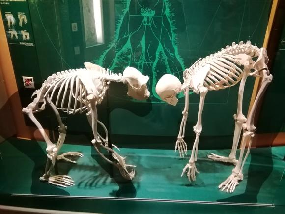 7月10日 群馬自然史博物館